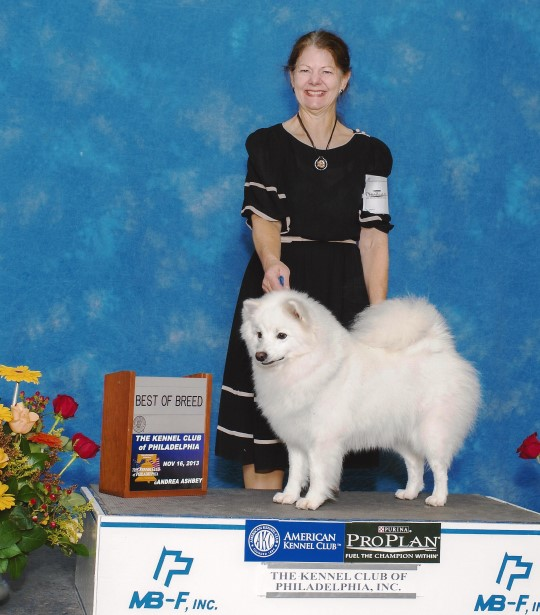 BEST OF BREED at the Philadelphia Kennel Club